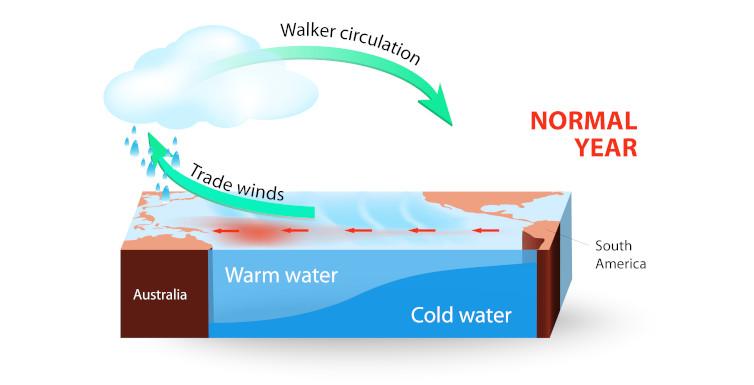 Diagram explaining the Walker circulation cell
