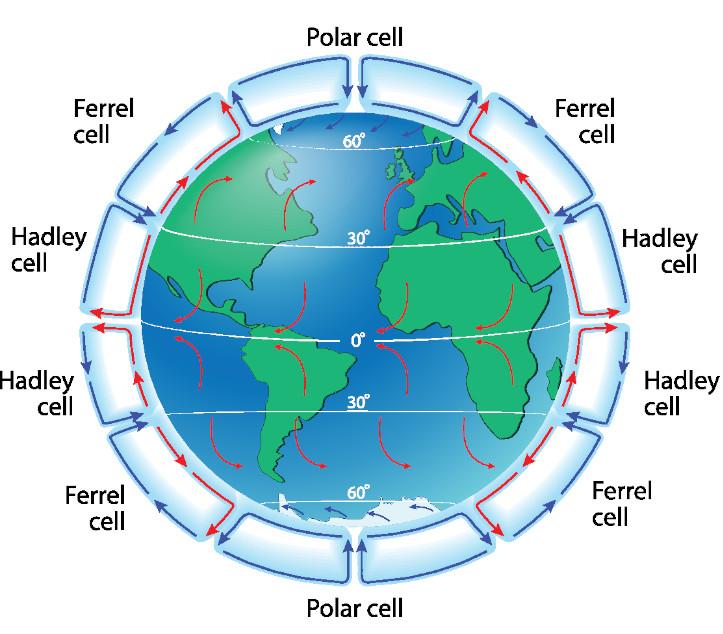 Diagram of the global atmospheric circulation cells