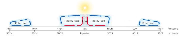 Polar cell diagram